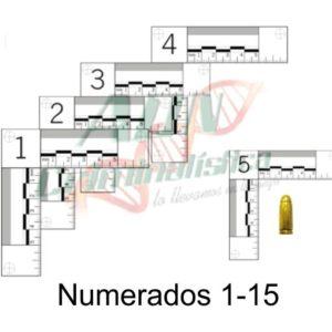 Testigos métricos L numeradas